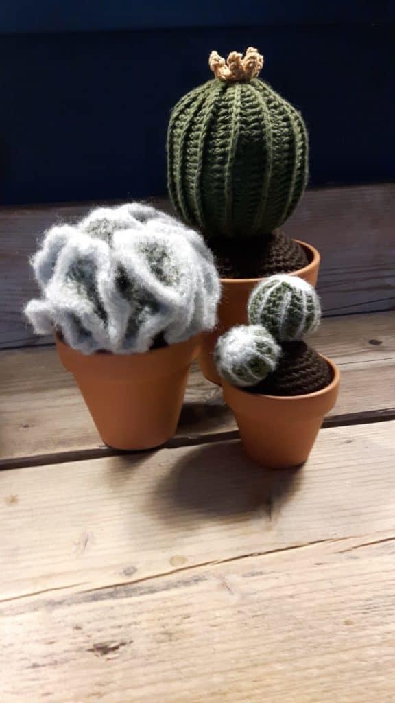 zelf cactussen haken